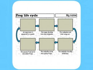 Life Cycle of a frog worksheet 5