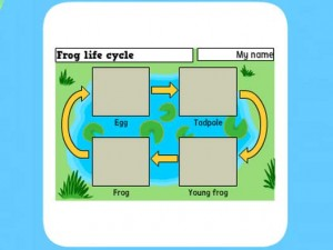 Life Cycle of a frog worksheet 2