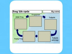 Life Cycle of a frog worksheet 3