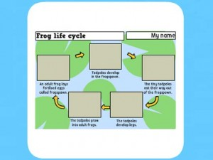 Life Cycle of a frog worksheet 4