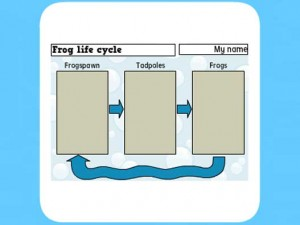 Life Cycle of a frog worksheet 1