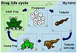 Frog life cycle icon