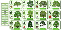 Common trees icon