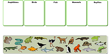 Classes of vertebrates icon