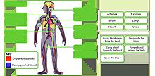 Circulatory system icon
